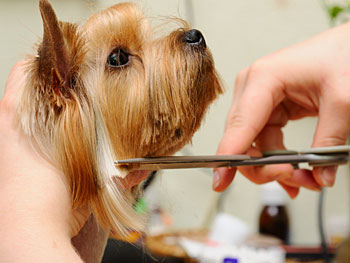 Dog Grooming in Charlottesville